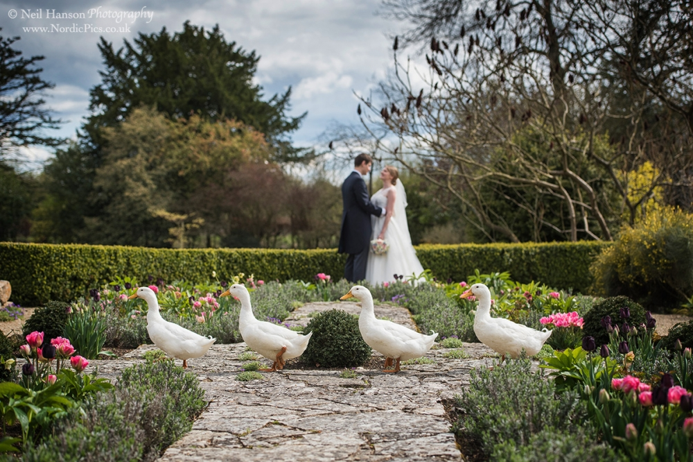 Caswell House Wedding Ducks